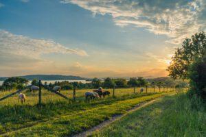 waarom boerderij kopen